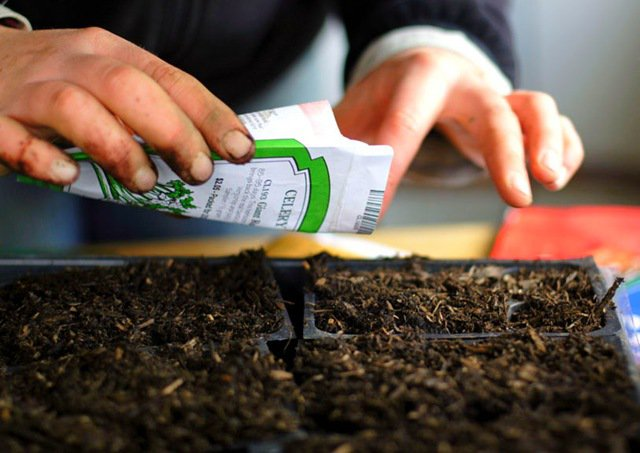 Календарь посадки семян на рассаду 2018