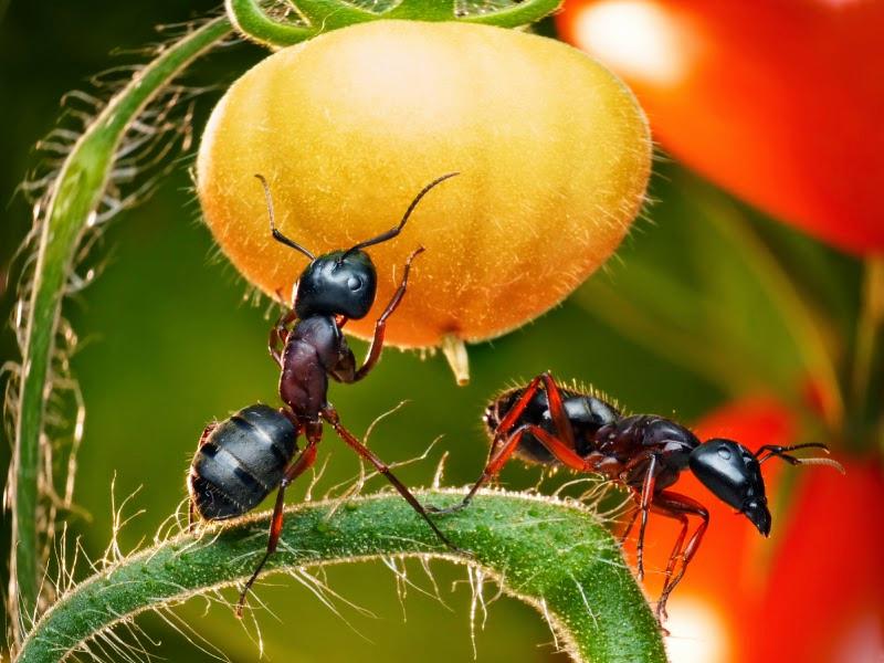 Как избавиться от муравьев на дачном участке и в огороде навсегда: проверенные способы борьбы, отзывы