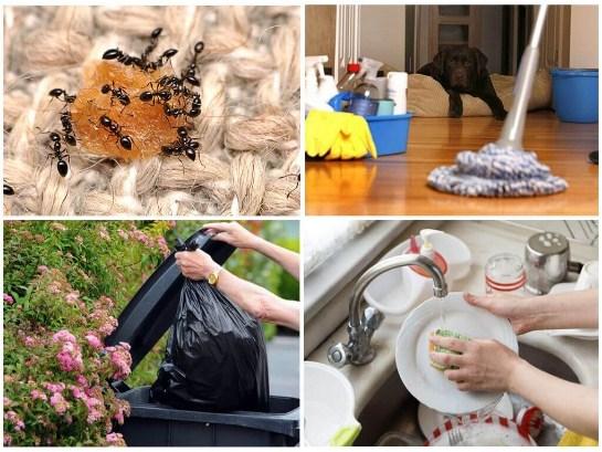 Как бороться с домашними муравьями в квартире и как избежать